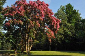 I dieci giardini che mi emozionano gita del 25 aprile for Piccoli giardini fioriti
