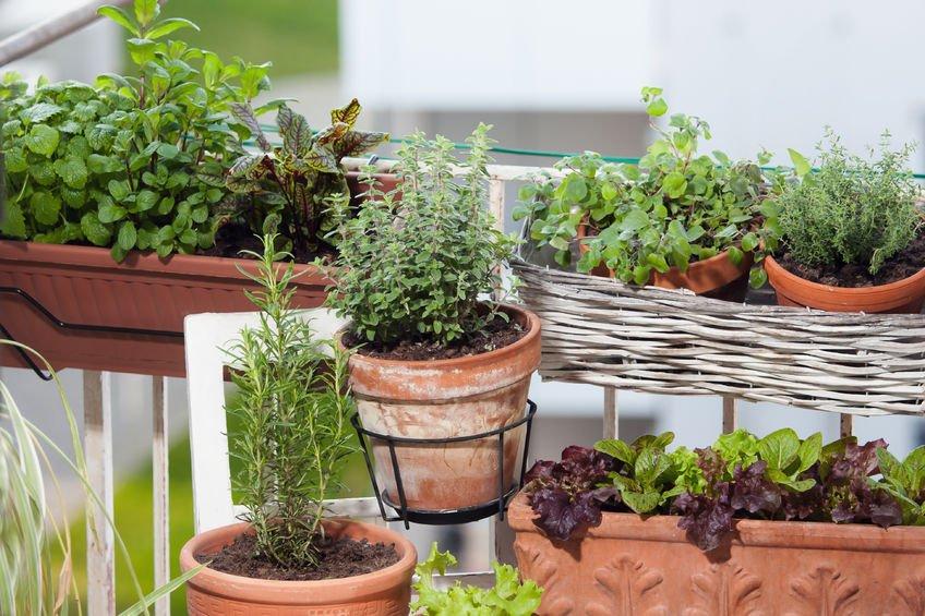 Piante aromatiche in terrazzo