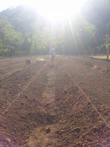 campo zafferano saraceno