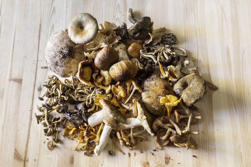 Funghi come riconoscerli pulirli cucinarli e conservarli