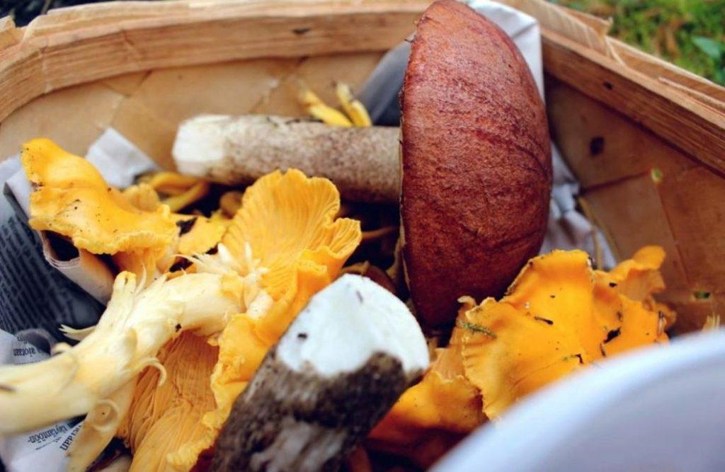 come-cucinare-i-funghi