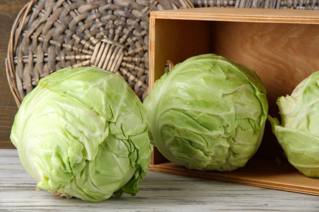 ricette-verdure-invernali-verza
