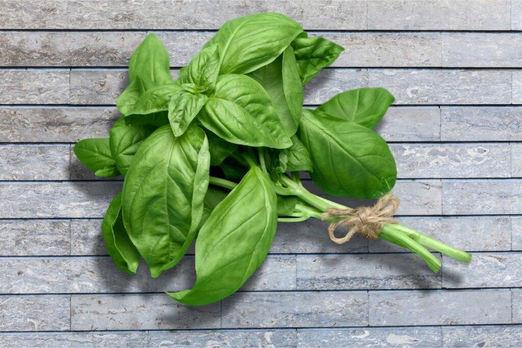 basilico-ricette-proprieta-coltivazione