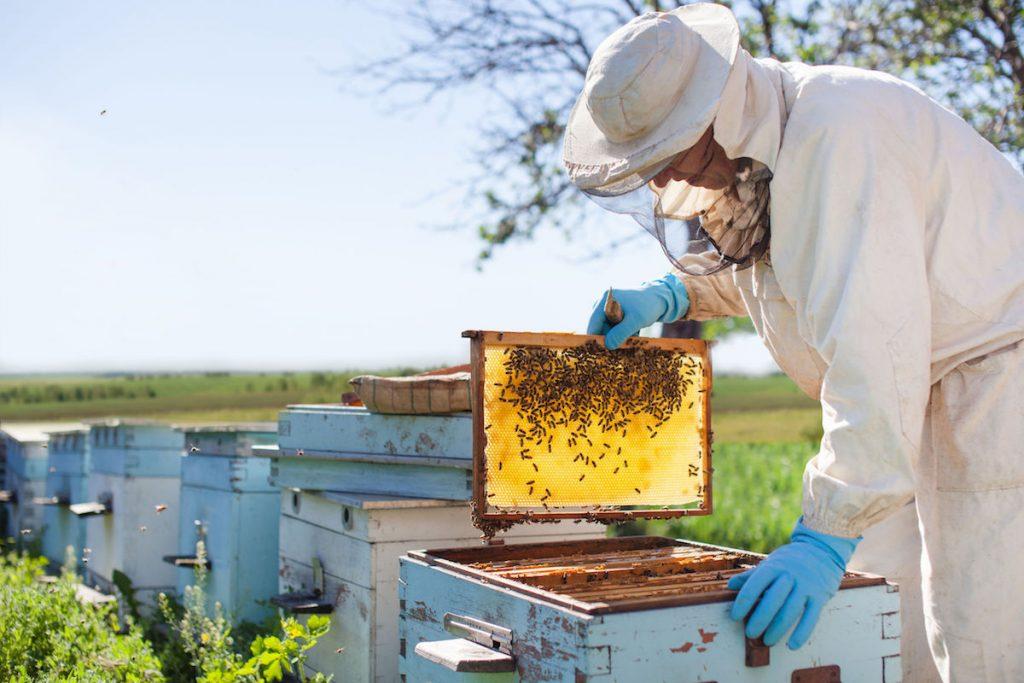 miele-in-cucina-ricette-con-miele