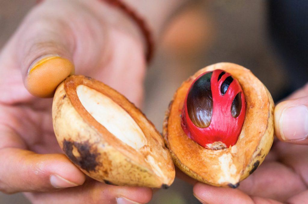 noce-moscata-frutto-seme